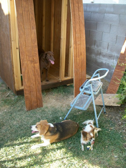 The front section lined up  for installation, with dogs eager to move in.