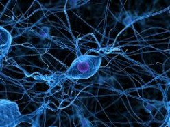 Neurones and Action Potentials
