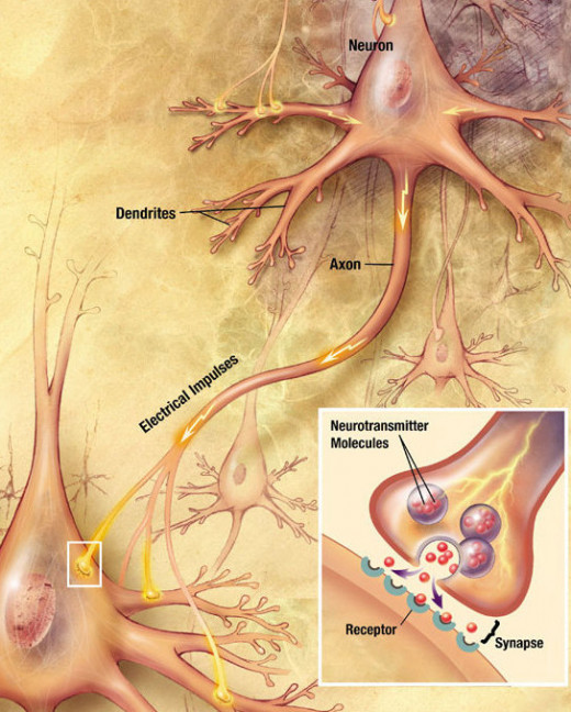 A diagram illustrating synaptic transmission.