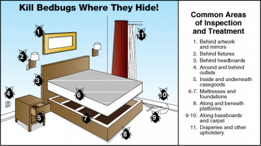 Places Bed Bugs Hide In Hotels