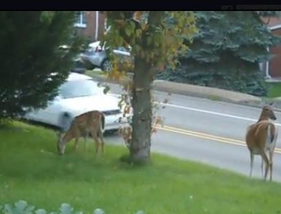 On your way, deer!