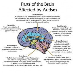 some things to remember about Autism