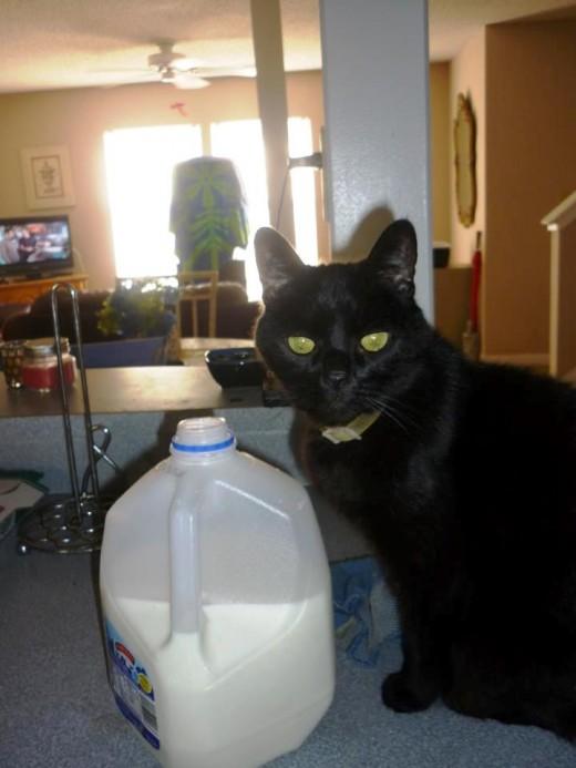 Sometimes he wants milk with his Tuna!