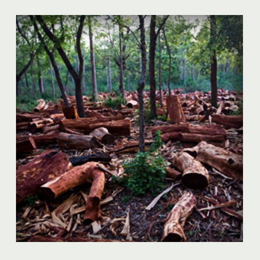It took nature decades of pampering to make these forests possible and we simply take them all down in a matter of days.