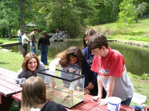Kids exploring frog tank