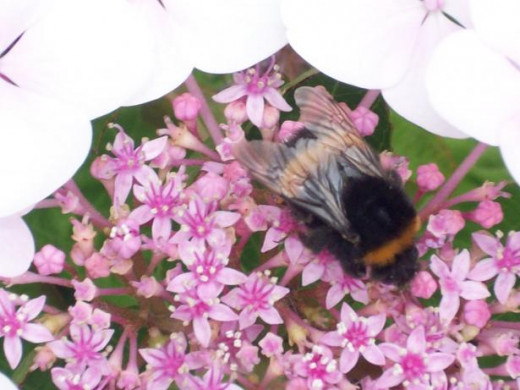 Bumble bees and bees will find their way to your care if you have lots of good pollinating flowers