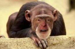 Monkey Boy picks the movies!