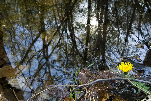 spring peepers in run-off from a little babbling brook in Gunpowder State Park. http://farm1.static.flickr.com/183/487030000_5d8931dbd2.jpg?v=0