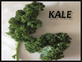 An Easy and Healthy Kale Snack Your Kids Will Love!