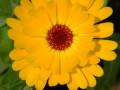 Nikon Coolpix L310 User Review