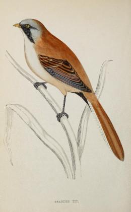 History of Birds-- Morris  1862-87