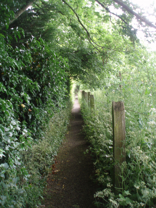 Narrow, Overgrown but Straight
