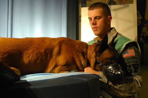Vet checks dog to see if his pneumonia is better
