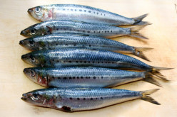 Sardines work wonders in your health; Here is how - Read the health benefits of Sardines