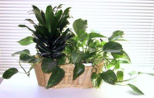 Decorating with plants is easy!
