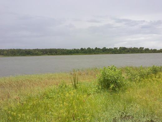 Taken on an island on Lake Weir