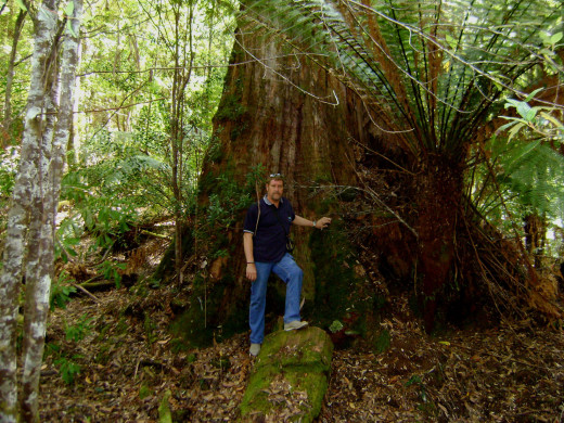 Tasmanian Rain Forest from Tony DeLorger