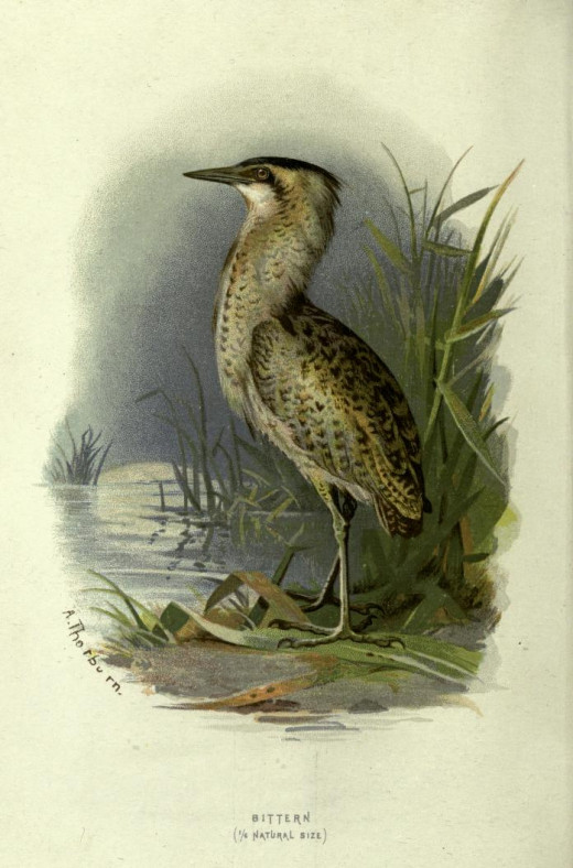 Familiar Wild Birds {Swayland 1883}