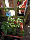 An Introduction to Growing an Edible Container Garden