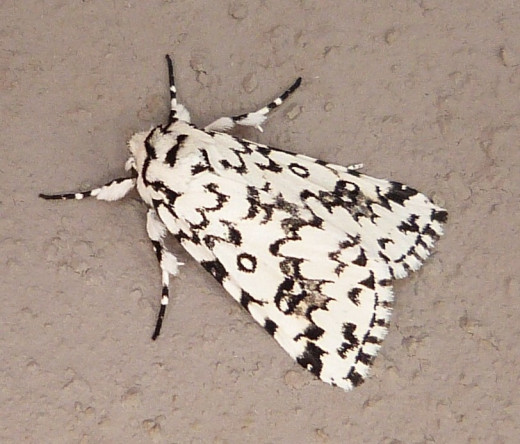 Moths are beautiful