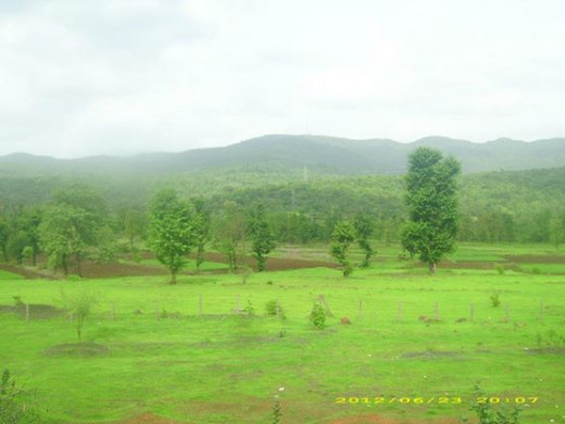 Plants, fields, the greenery will welcome you throughout the journey