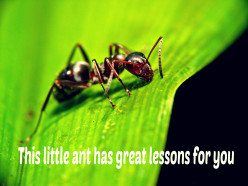 What can we learn from ants?