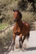 Humane Horse Equipment