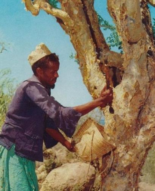 Somali man collecting incense.  Photo by Scoobycentric