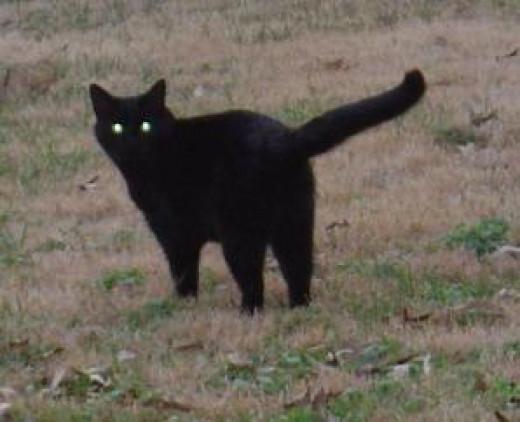 Lucky black cat.
