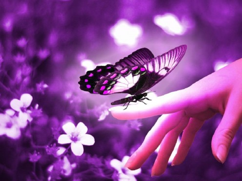 Image of a hand holding a butterfly