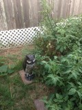 10 Uses for a Plastic Garden Owl