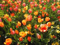 Orange Flowers: The New Gorgeous