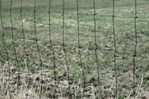 Woven wire fence in a field