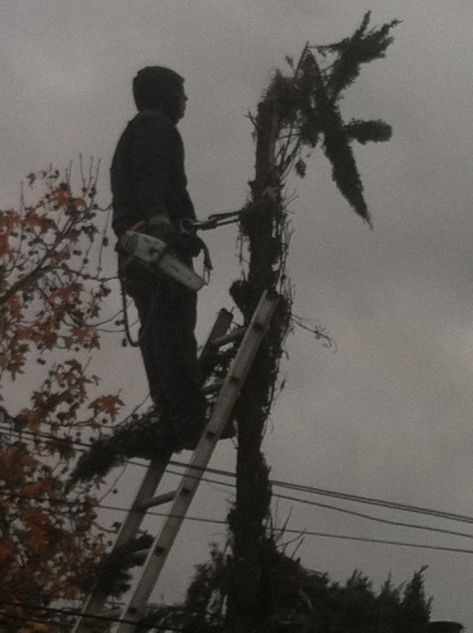 20 feet high holding on for dear life and wielding a chain saw -- now that is living!