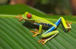 Costa Rica's Nature Photography
