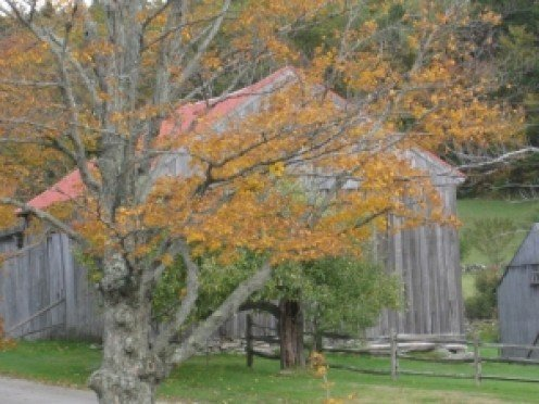 A barn in the fall like the one built on the King farm.
