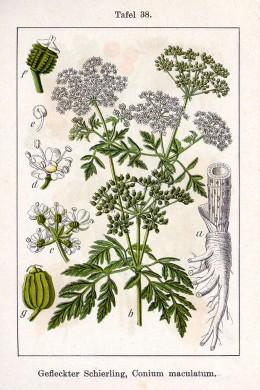 German  Flora { Painter Jacob Sturm}