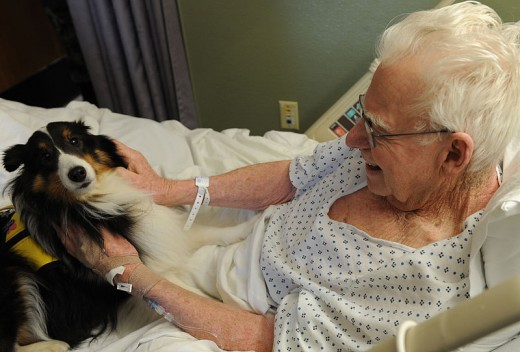 Animal assisted therapy can be of great benefit to people.