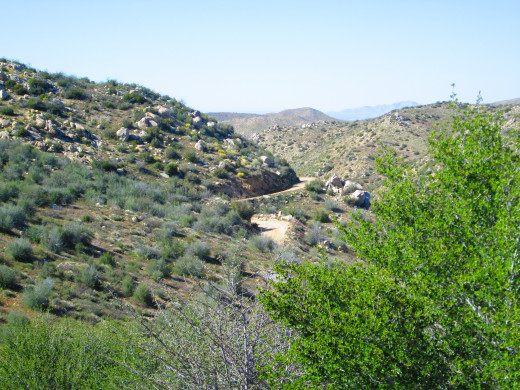 A view of the dirt portion of Highway 173 in the distance, with some chaparral in the foreground.
