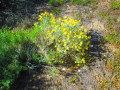 Wildflowers And Shrubs In The San Bernardino Mountains