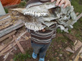 Homeschooling-Lessons of Opportunity: The Moose Skull