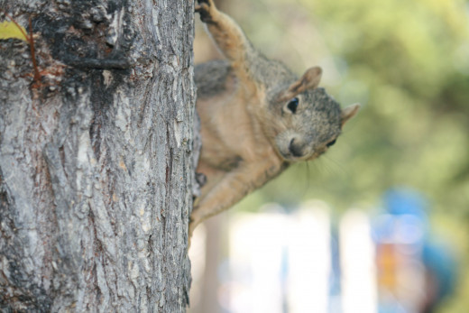 This stalker squirrel at a park was inches from my face, ready to pounce, until nearby teenagers warned me.