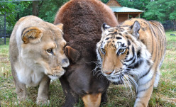 5 Unbelievable Animal Friendships that Will Melt Your Heart