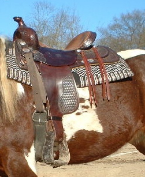 Saddle horse ready to ride the pasture lines