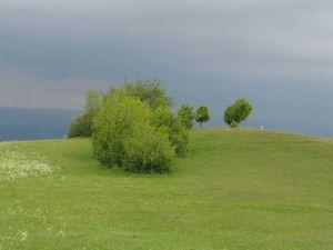A grassy knoll
