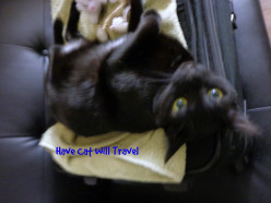 Travels with Kitty:  Little Cat Sat Beside Me in the Airplane