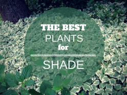 Perfect Plants for a Shade Garden