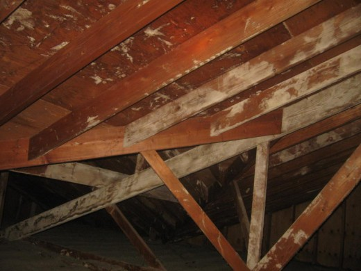 White fuzzy mold in basement or something else hubpages for Mold resistant insulation