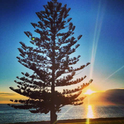 A Pine Tree near Kiama Blowhole and Lighthouse receiving the first rays of the sun as it finally emerges from the clouds on June 22 2014 (Southern Hemisphere's Winter Solstice)
