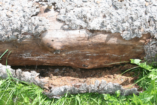 "Bark beetle frass from under the bark of this log made great miniature bark for my trail.  Chunks of bark were the roof for my ""toad abode"" tucked under the deck."